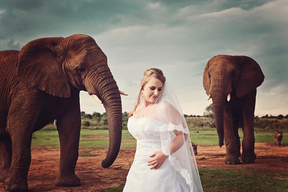 wedding at askari